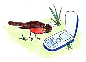 Contact Us | Chicago Bird Collision Monitors